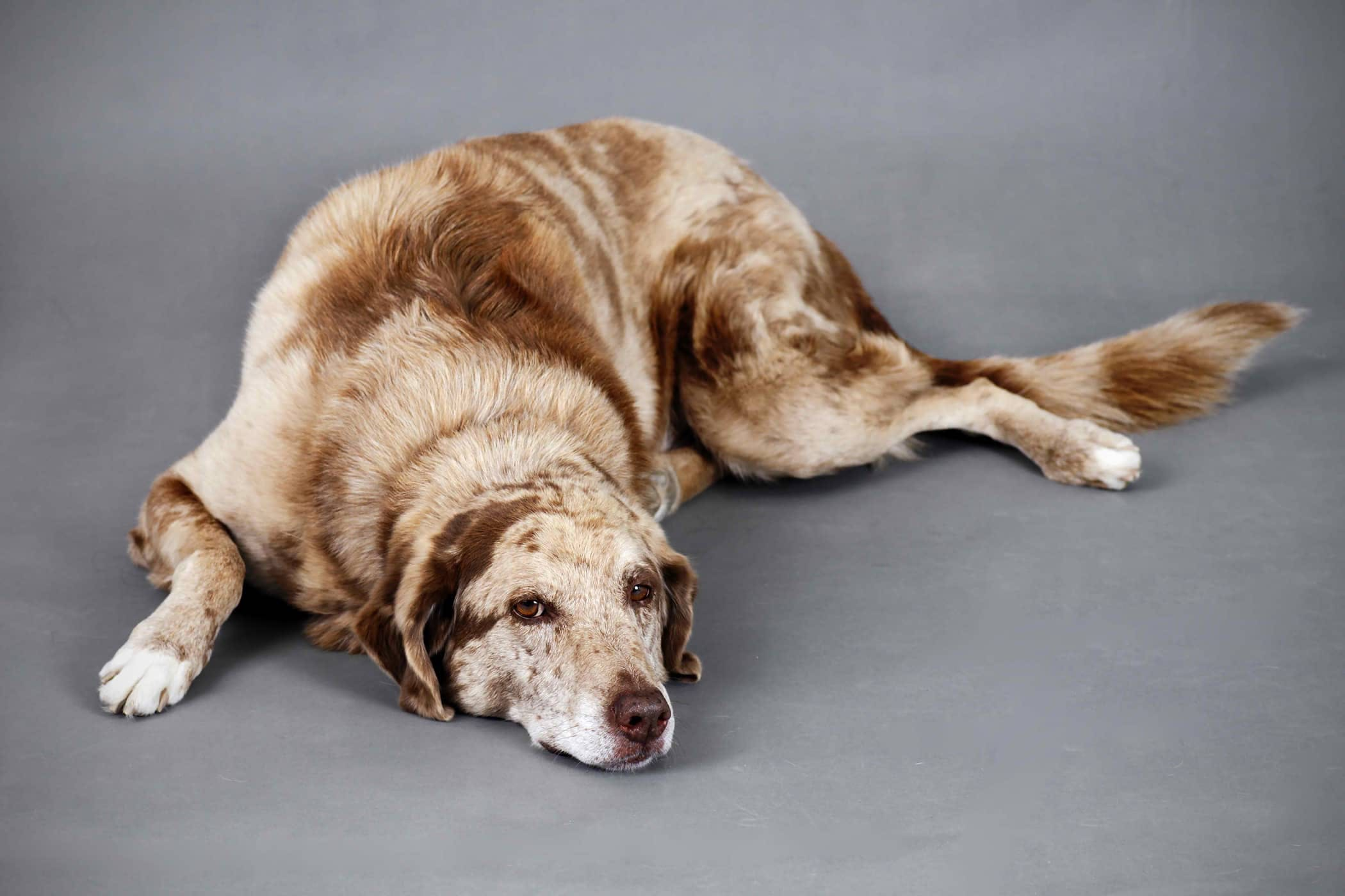 Natural Seizure Remedies in Dogs - Procedure, Efficacy