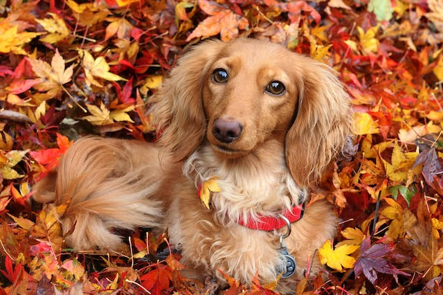 Natural Urinary Tract Infection Remedies in Dogs - Conditions Treated, Procedure, Efficacy, Recovery, Cost, Considerations, Prevention