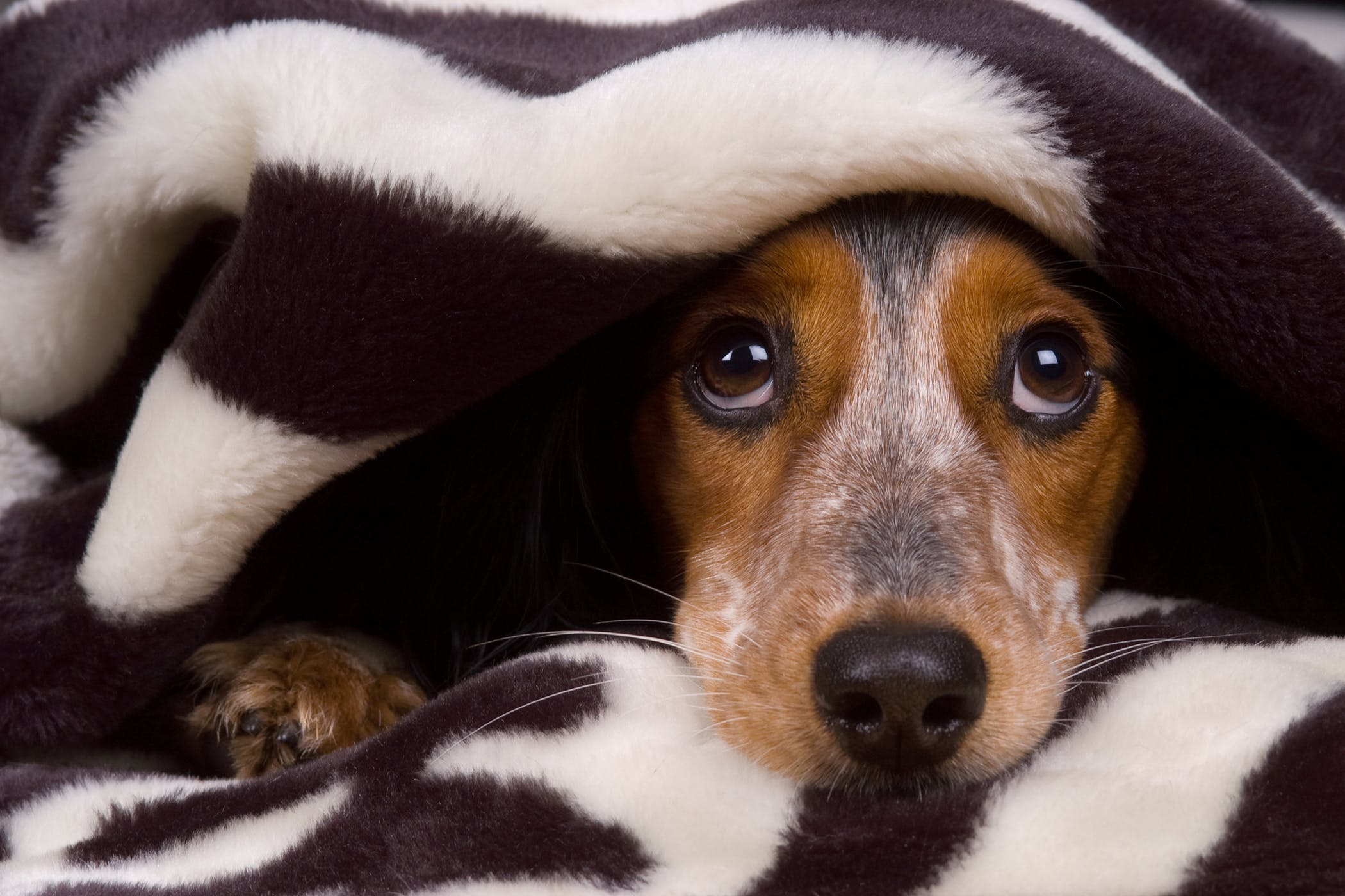 Neutering in Dogs - Procedure, Efficacy, Recovery ...
