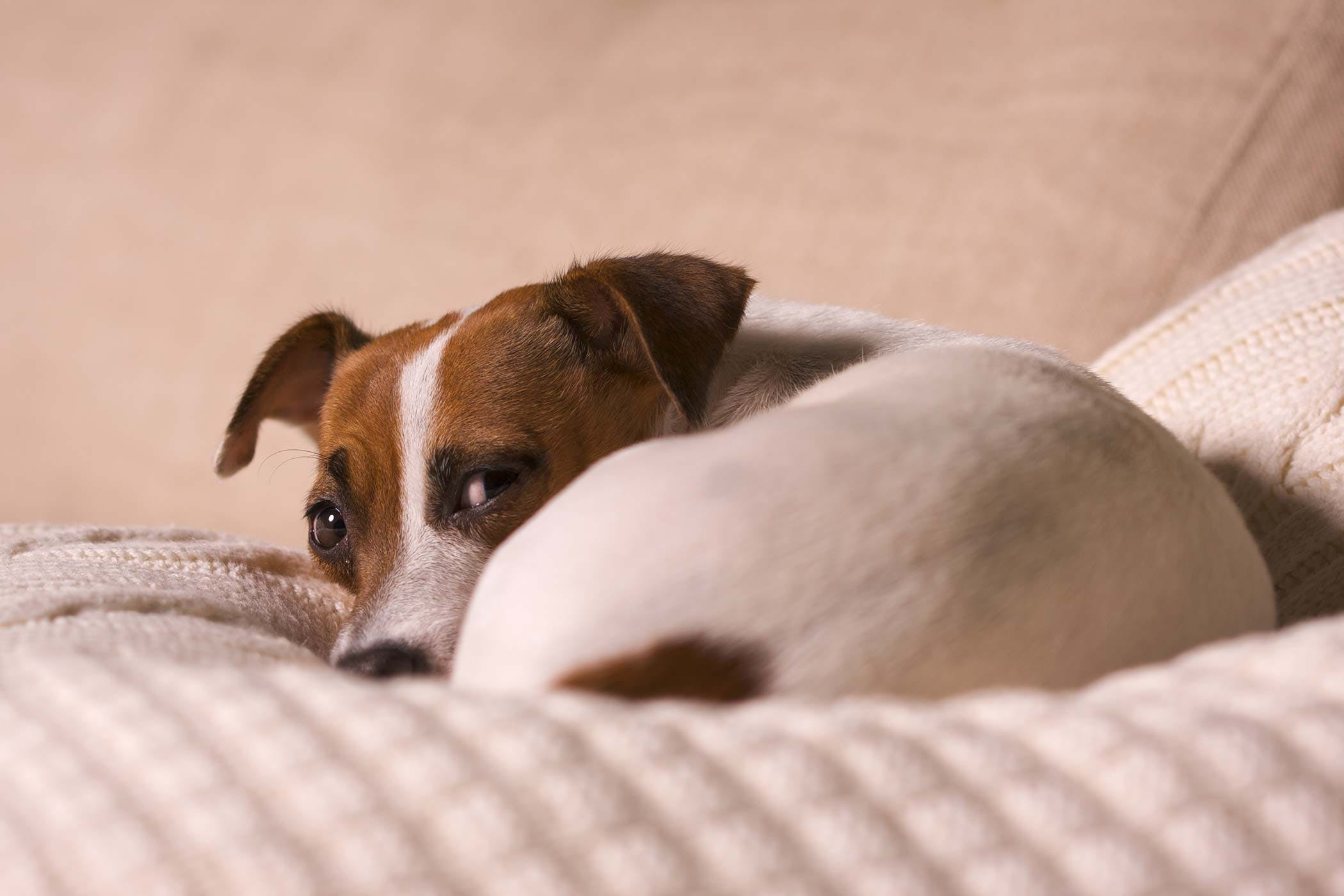 Can Dog Allergies Cause Wheezing