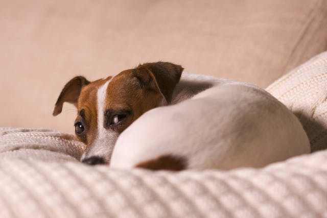 New Food Allergies in Dogs - Symptoms, Causes, Diagnosis, Treatment, Recovery, Management, Cost
