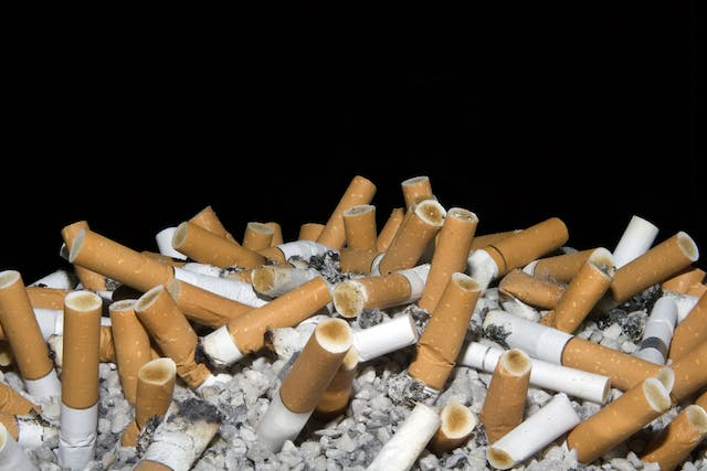 Nicotine Poisoning in Dogs - Symptoms, Causes, Diagnosis, Treatment, Recovery, Management, Cost