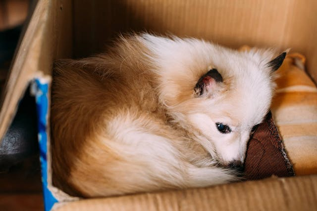 Nonproductive Vomiting in Dogs - Symptoms, Causes, Diagnosis, Treatment, Recovery, Management, Cost
