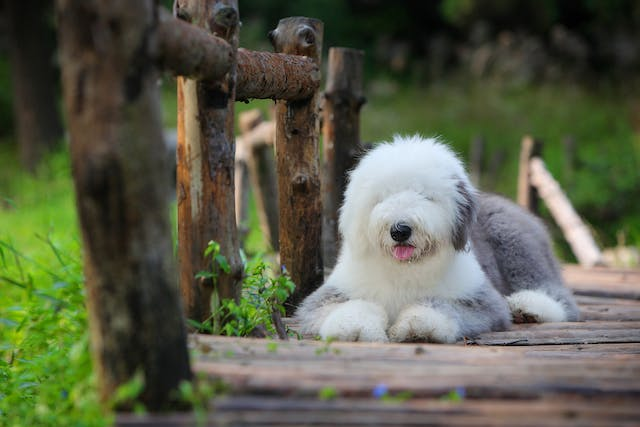 Open Wounds in Dogs - Symptoms, Causes, Diagnosis, Treatment, Recovery, Management, Cost