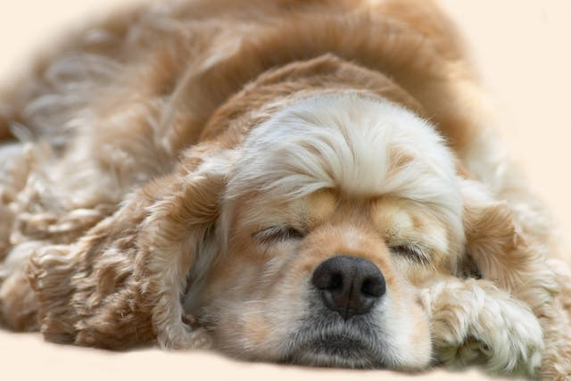 Ophthalmia Neonatorum in Dogs - Symptoms, Causes, Diagnosis, Treatment, Recovery, Management, Cost