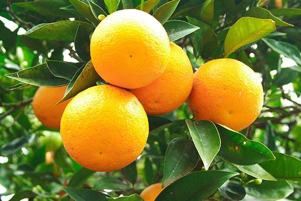 Orange Poisoning in Dogs - Symptoms decf89bde
