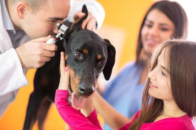 Otoscopy in Dogs - Conditions Treated, Procedure, Efficacy, Recovery, Cost, Considerations, Prevention