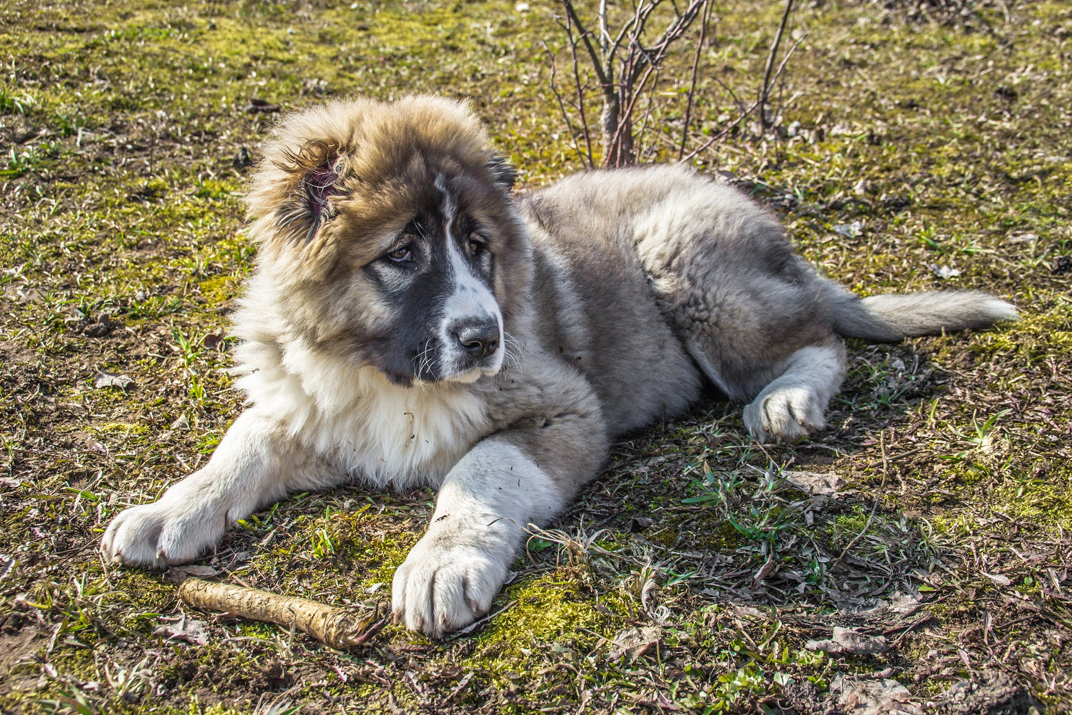 Ovariectomy in Dogs