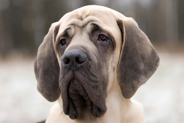Oxalates (Soluble) Poisoning in Dogs - Symptoms, Causes, Diagnosis, Treatment, Recovery, Management, Cost