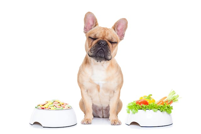 Pancreatitis in Dogs - Symptoms, Causes, Diagnosis, Treatment, Recovery, Management, Cost