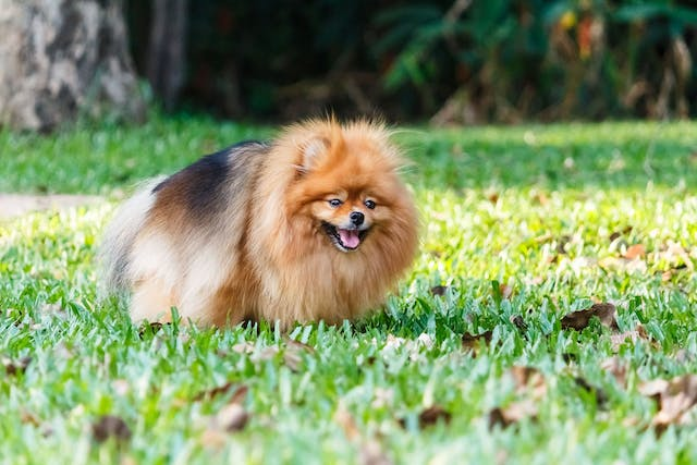 Parasitic Diarrhea (Giardiasis) in Dogs - Symptoms, Causes, Diagnosis, Treatment, Recovery, Management, Cost