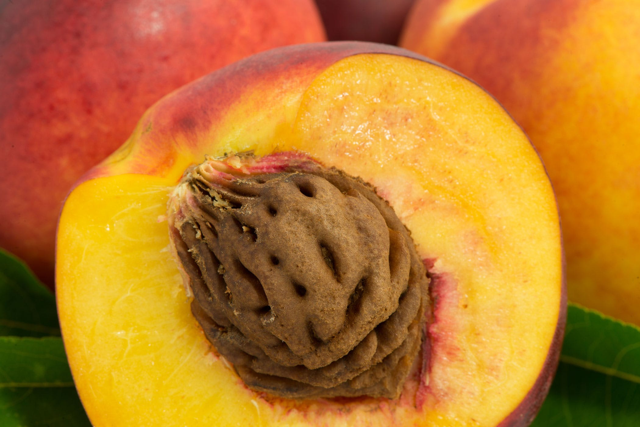 Peach Pits Poisoning in Dogs