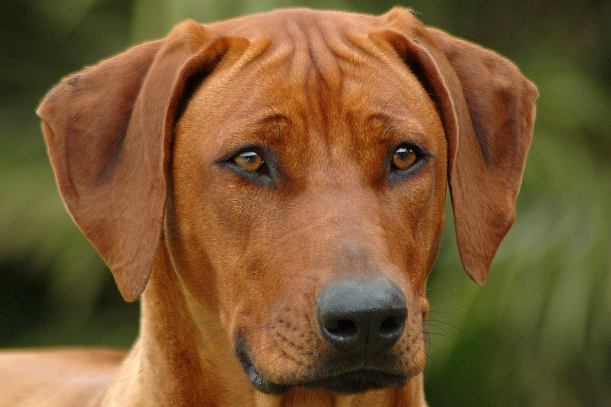Long Branch Dog Walker