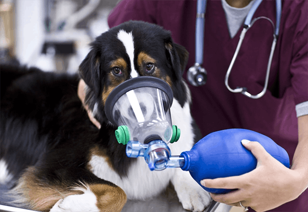 Plastic Allergies in Dogs - Symptoms, Causes, Diagnosis, Treatment, Recovery, Management, Cost