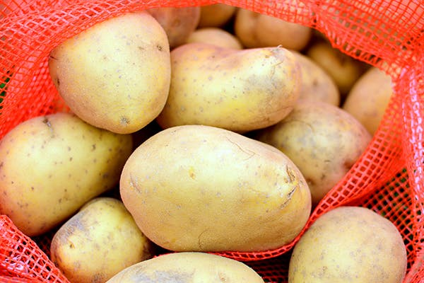Potato Allergies in Dogs - Symptoms, Causes, Diagnosis, Treatment, Recovery, Management, Cost
