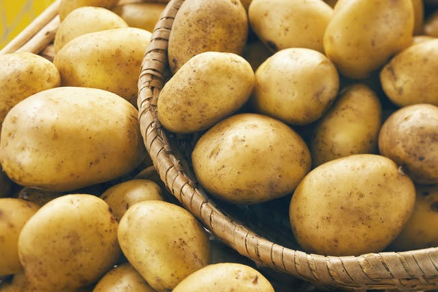Potato (Green) Poisoning in Dogs - Symptoms, Causes, Diagnosis, Treatment, Recovery, Management, Cost