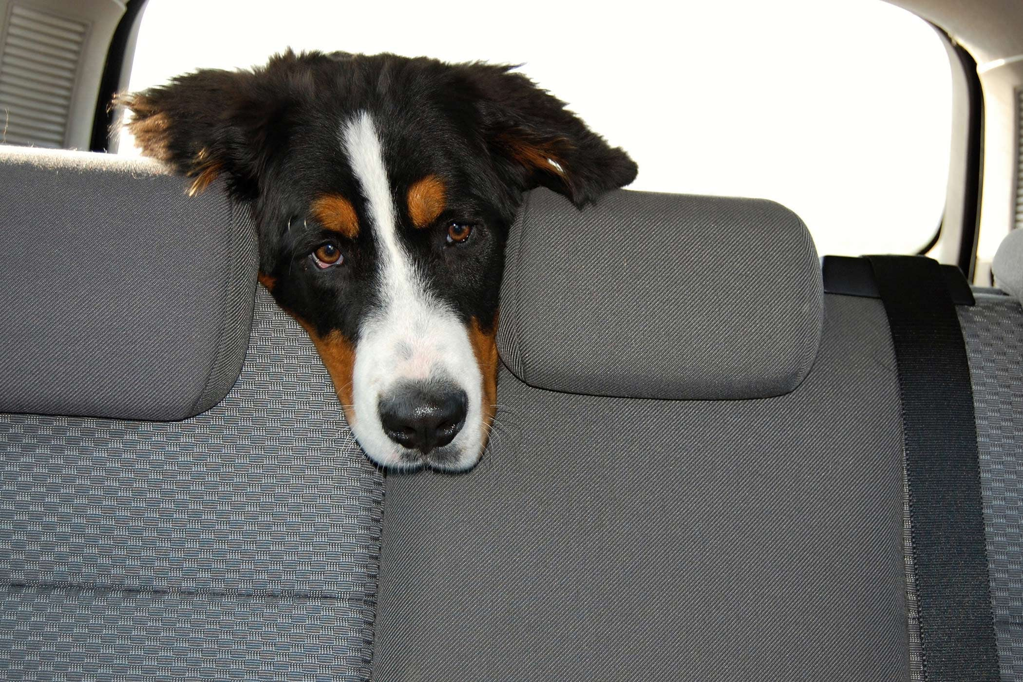 Protein Losing Nephropathy in Dogs - Symptoms, Causes, Diagnosis ...