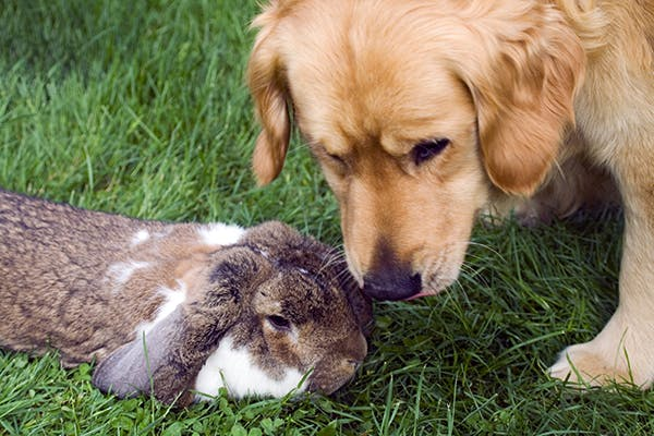 Rabbit Allergies In Dogs Symptoms Causes Diagnosis Treatment
