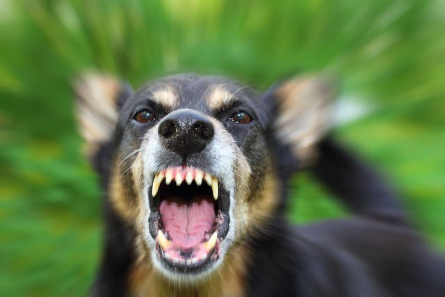Rabies in Dogs - Symptoms, Causes, Diagnosis, Treatment, Recovery, Management, Cost