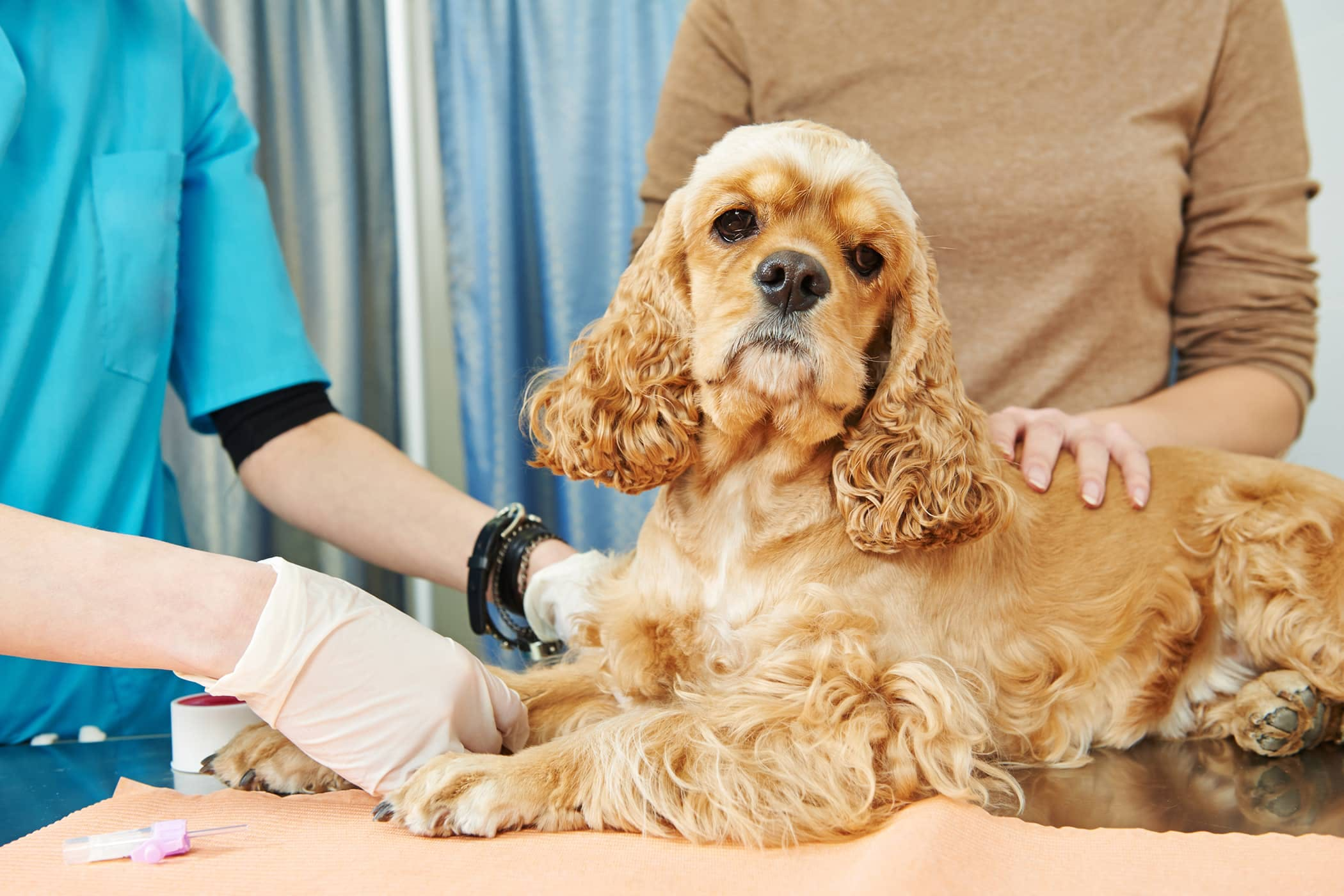 Radioactive Iodine Therapy in Dogs