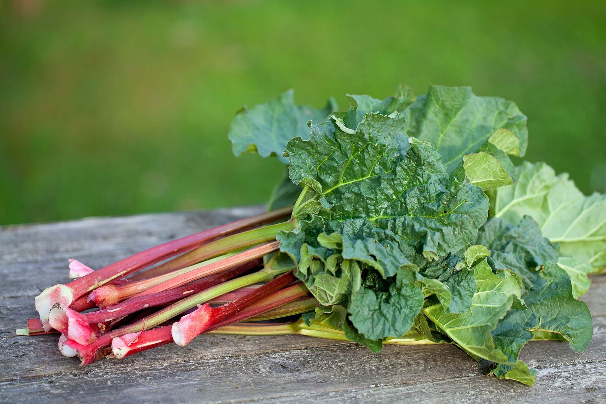 """Résultat de recherche d'images pour """"rhubarb dog"""""""