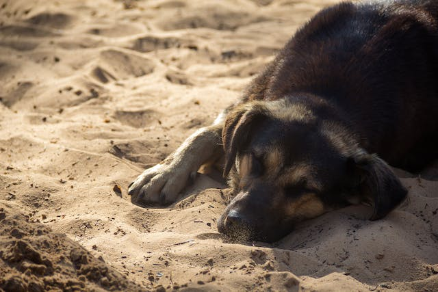 Rat Poison Toxicity in Dogs - Symptoms, Causes, Diagnosis, Treatment, Recovery, Management, Cost