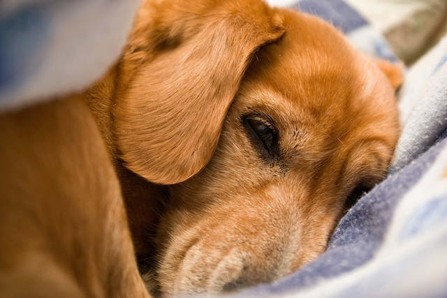 Saliva Allergies in Dogs - Symptoms, Causes, Diagnosis, Treatment, Recovery, Management, Cost
