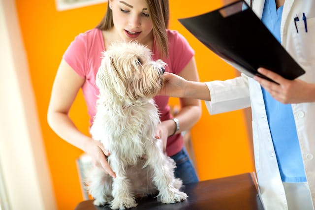 Salmonella Infection in Dogs - Symptoms, Causes, Diagnosis, Treatment, Recovery, Management, Cost