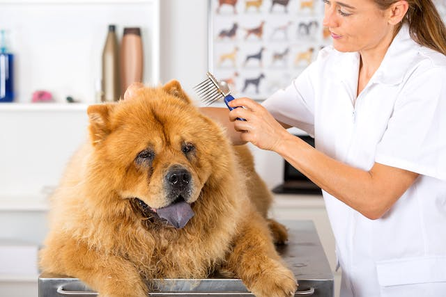 Scaly Skin in Dogs - Signs, Causes, Diagnosis, Treatment, Recovery, Management, Cost