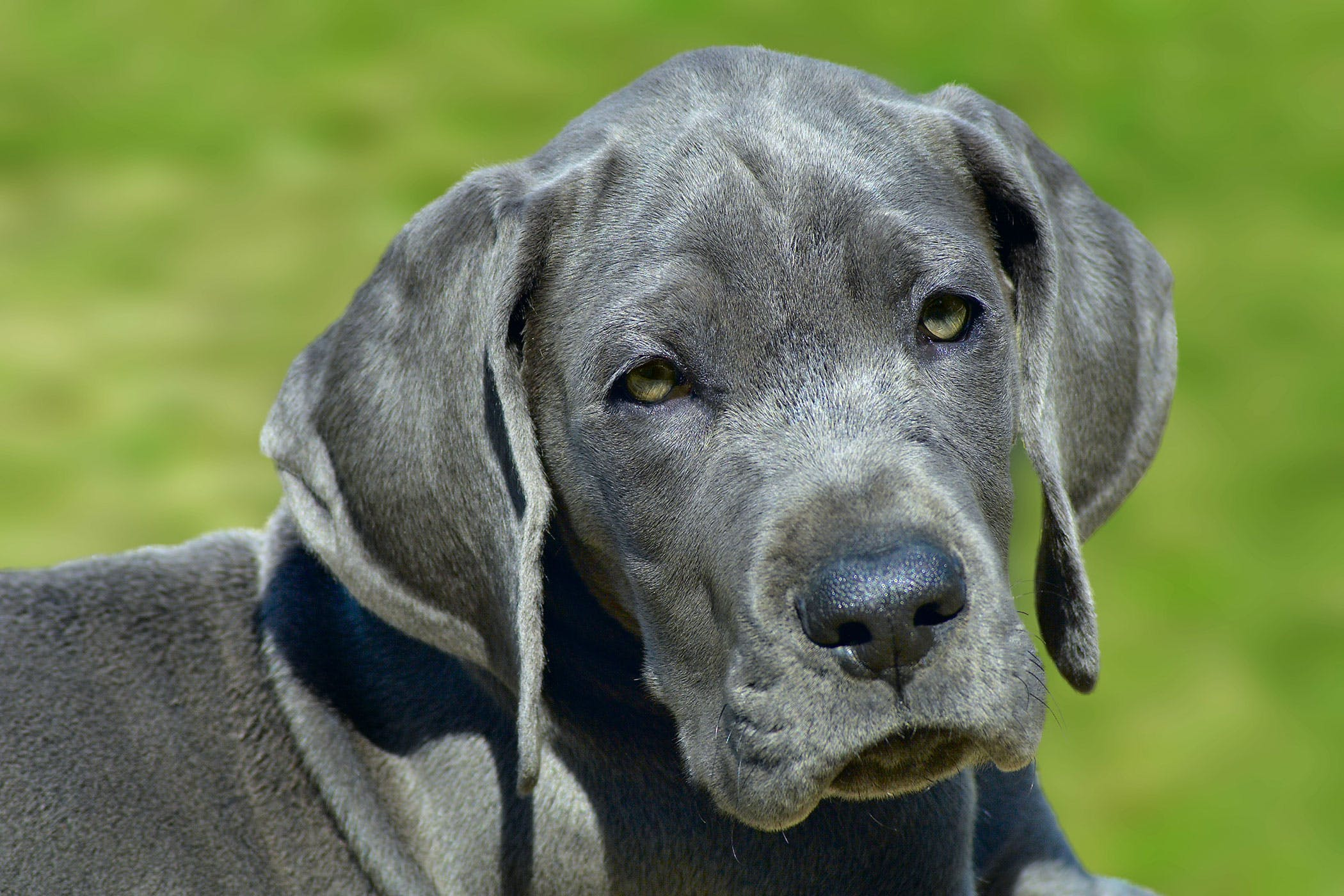 Skin Infections and Loss of Skin Color Disorders in Dogs - Symptoms ...