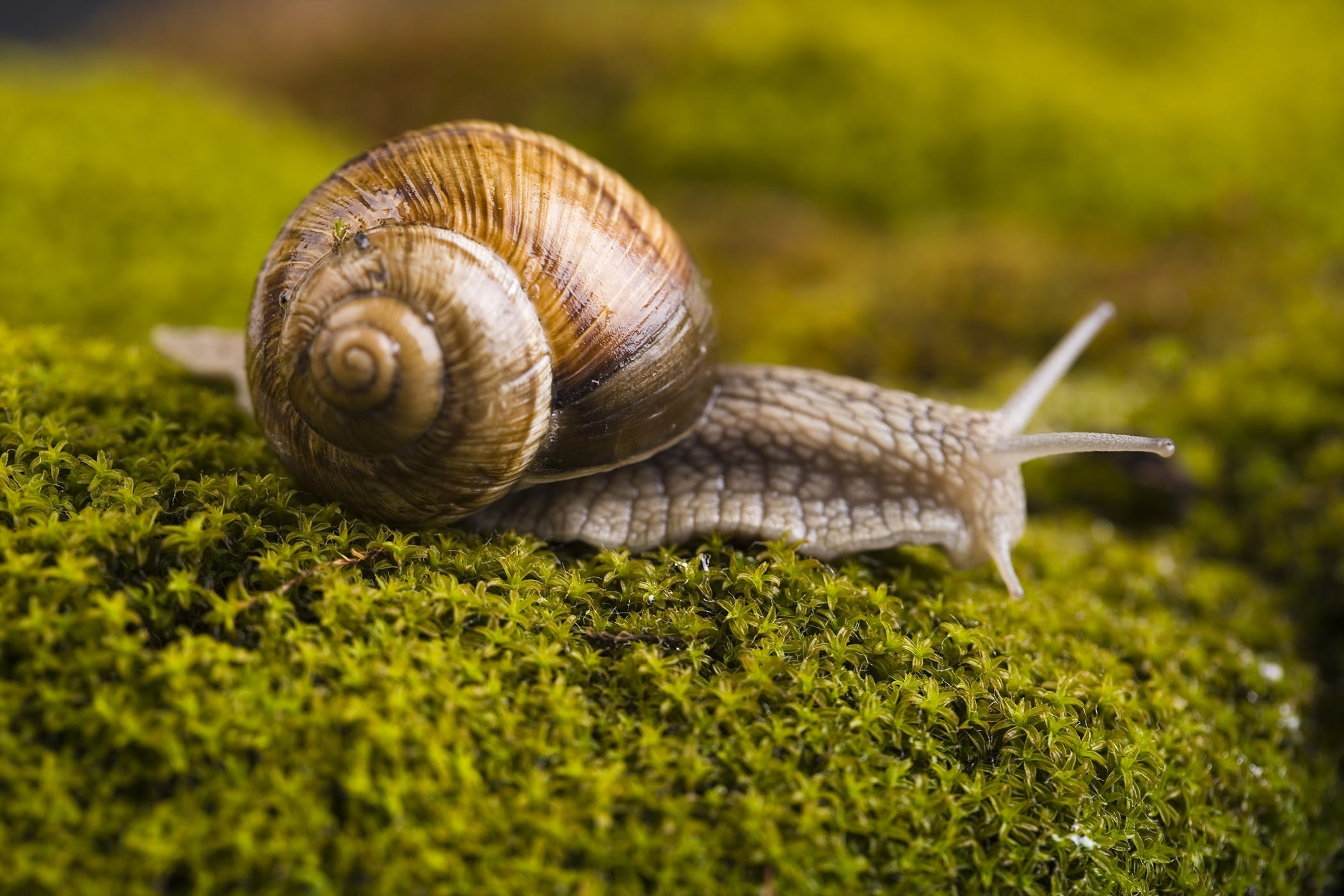 Slug and Snail Bait Poisoning in Dogs - Symptoms, Causes, Diagnosis ...
