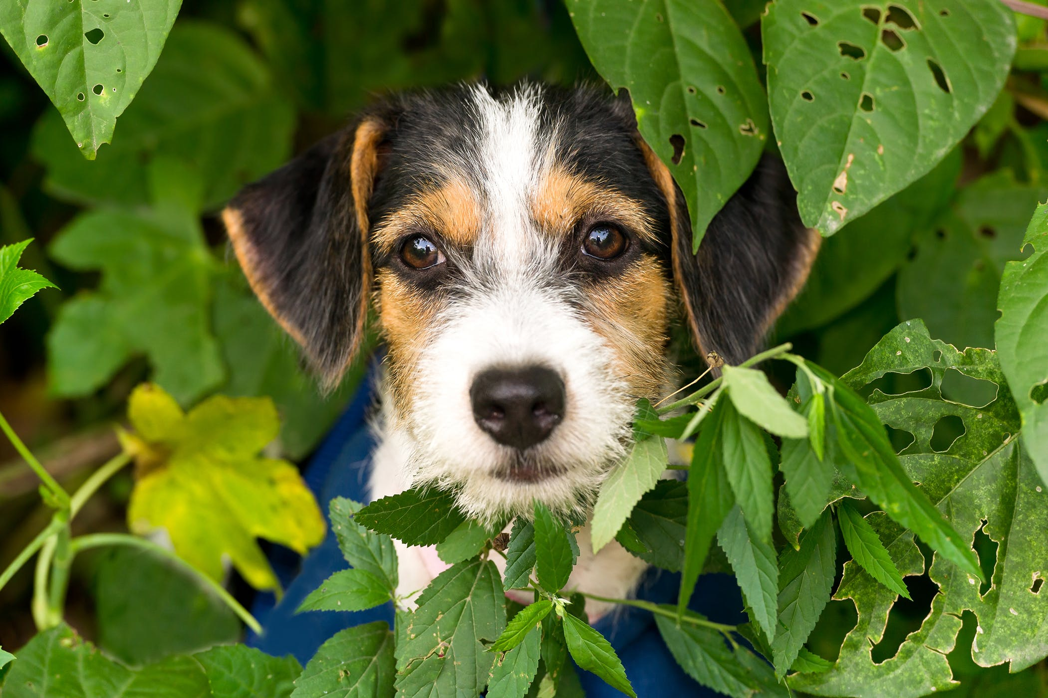 Bacterial Overgrowth In Dogs Small Intestine