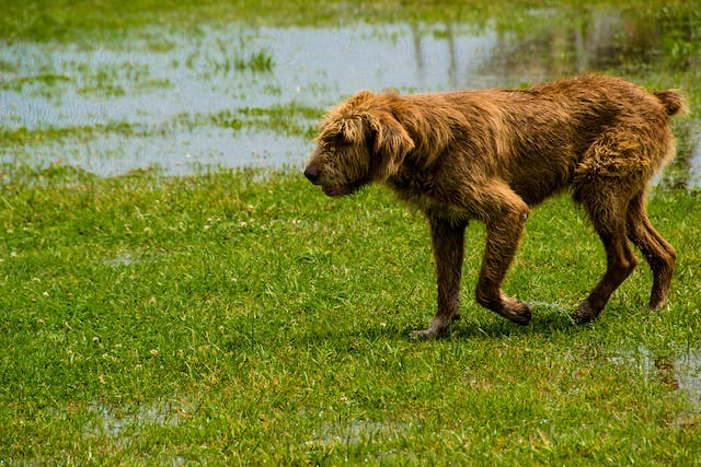 Snake Bite in Dogs - Symptoms, Causes, Diagnosis, Treatment, Recovery, Management, Cost