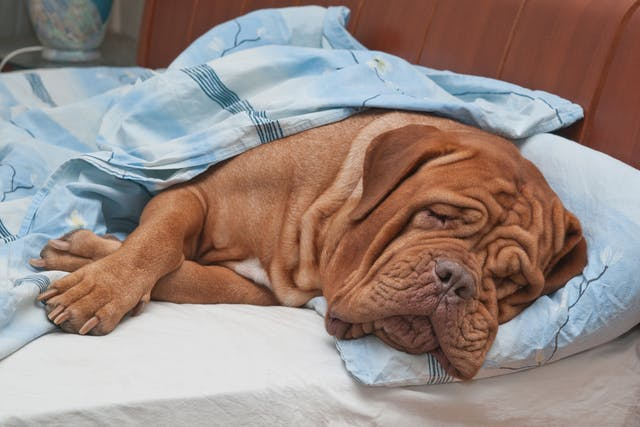 Sodium Phosphate Enema Toxicity in Dogs - Symptoms, Causes, Diagnosis, Treatment, Recovery, Management, Cost