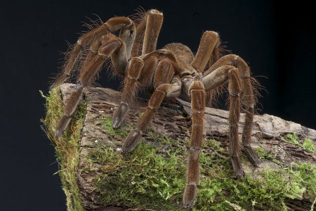 Spiders Poisoning in Dogs - Symptoms, Causes, Diagnosis, Treatment, Recovery, Management, Cost
