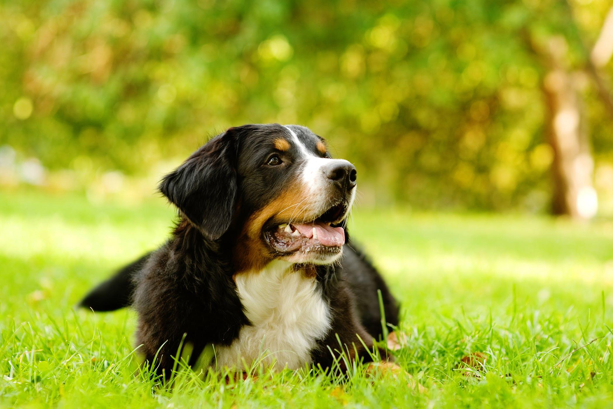 dog back injury symptoms