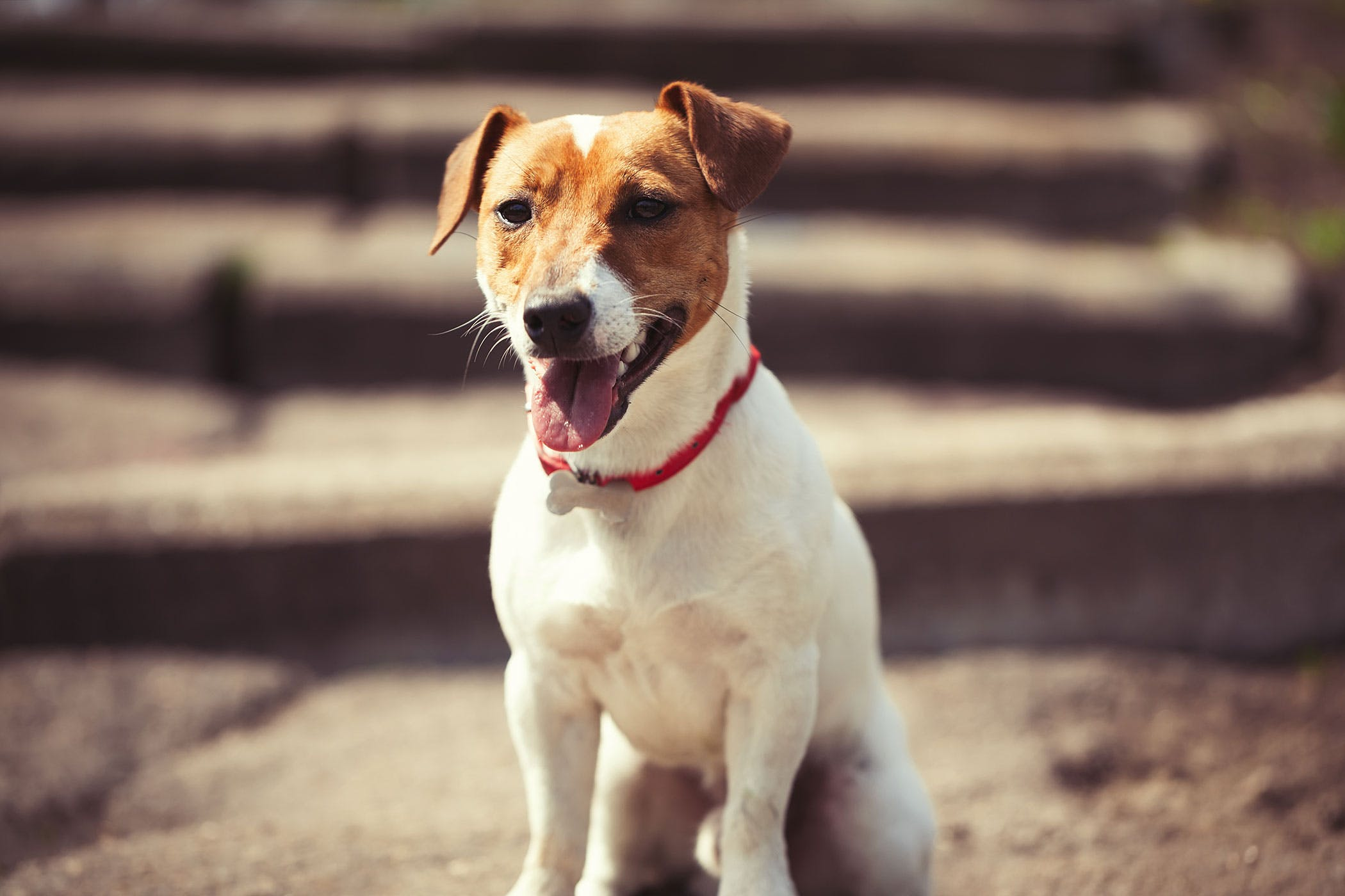 Stronglyoidiasis in Dogs - Symptoms, Causes, Diagnosis