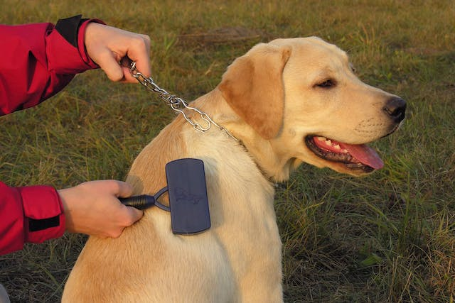 Telogen Defluxion in Dogs - Symptoms, Causes, Diagnosis, Treatment, Recovery, Management, Cost