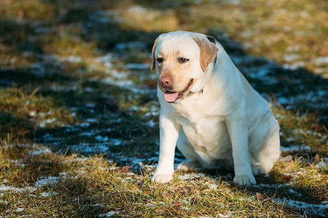 Thickening of the Uterus Lining and Fluid-filled Sac in Dogs - Symptoms, Causes, Diagnosis, Treatment, Recovery, Management, Cost