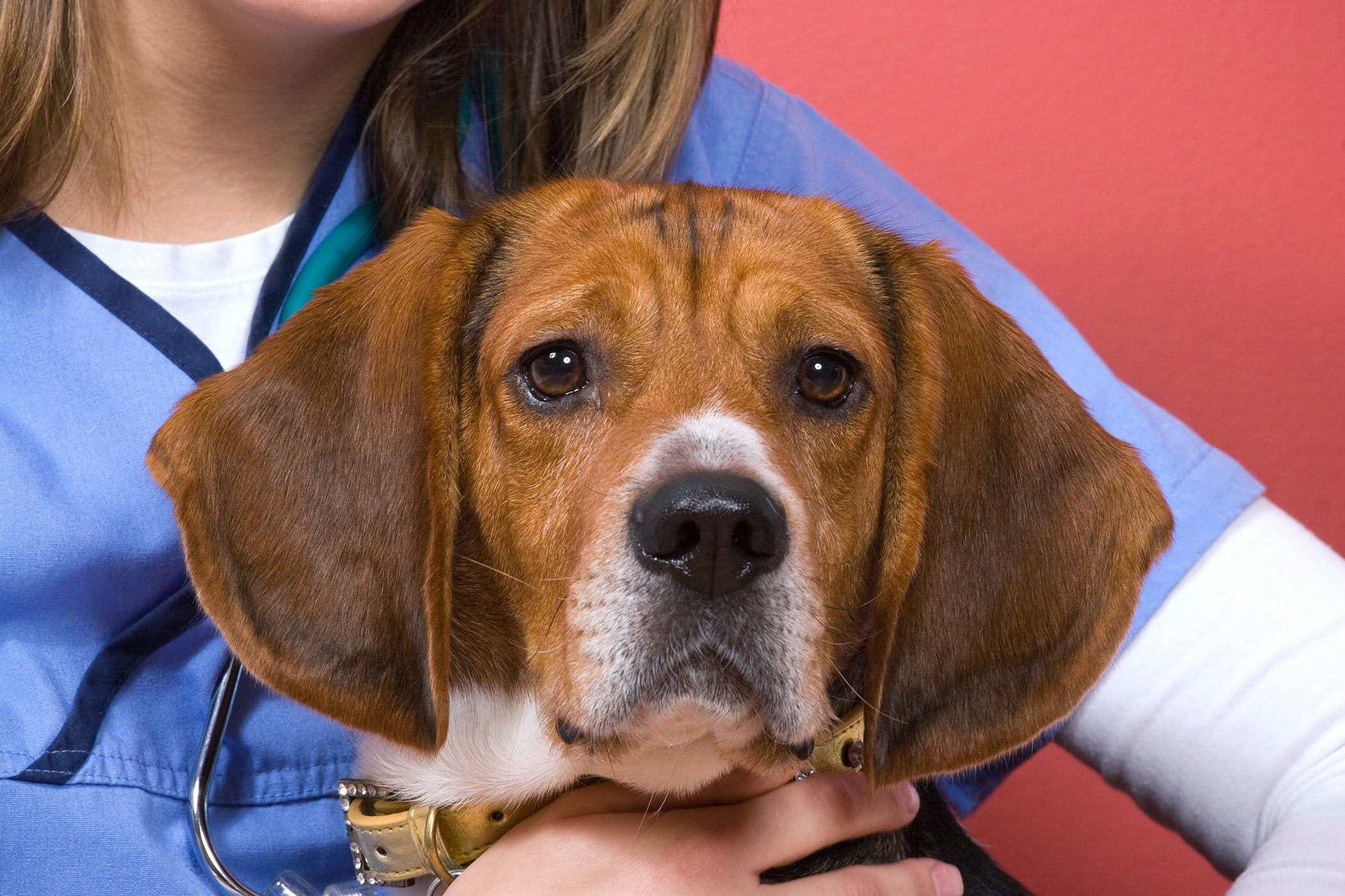 Thyroid Cancer Adenocarcinoma In Dogs Symptoms Causes