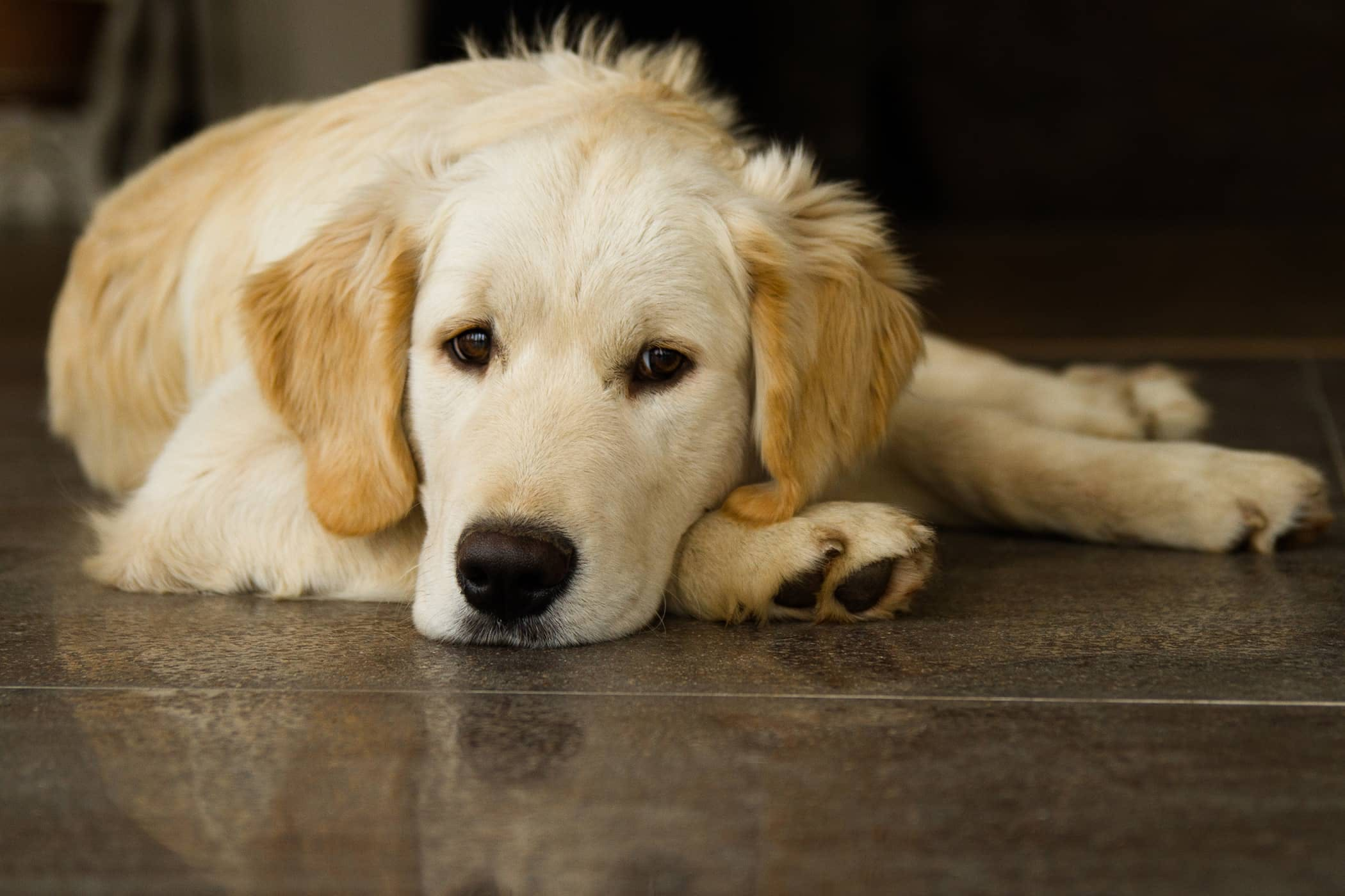 Tick-Borne Diseases in Dogs - Symptoms, Causes, Diagnosis