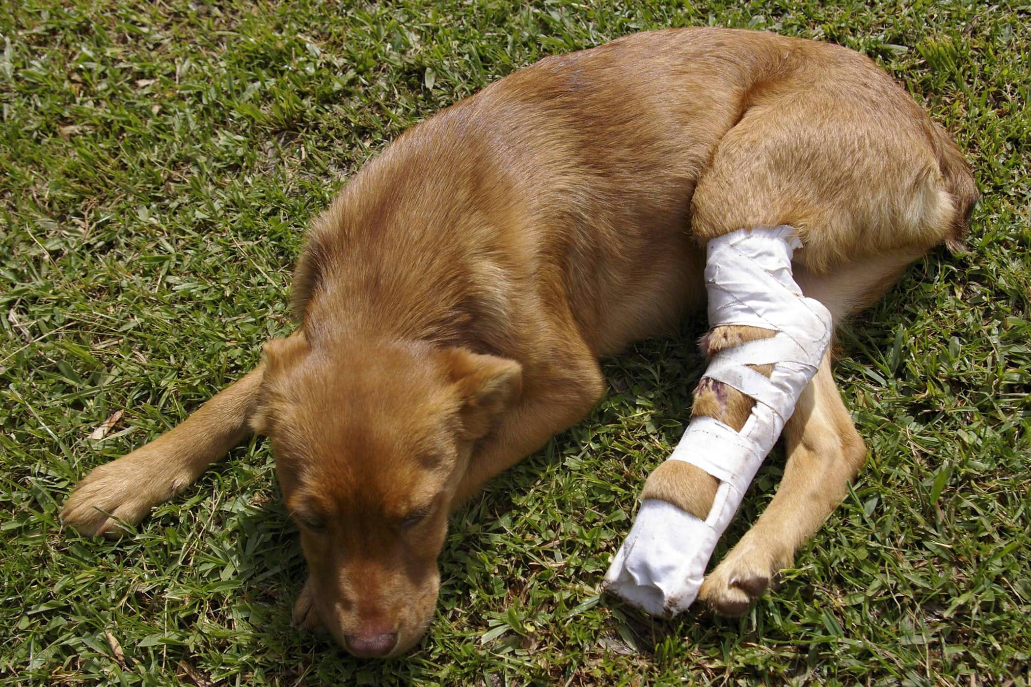 Trochlear Recession in Dogs