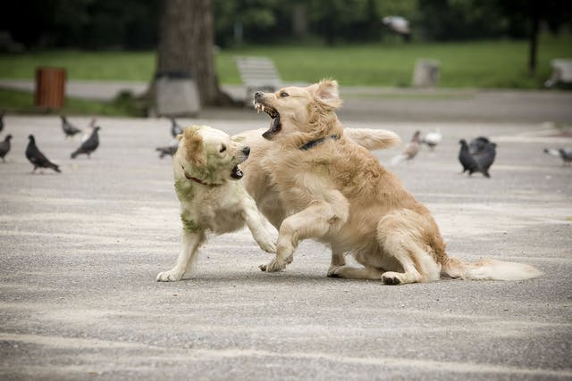 Unruly Behavior in Dogs - Symptoms, Causes, Diagnosis, Treatment, Recovery, Management, Cost