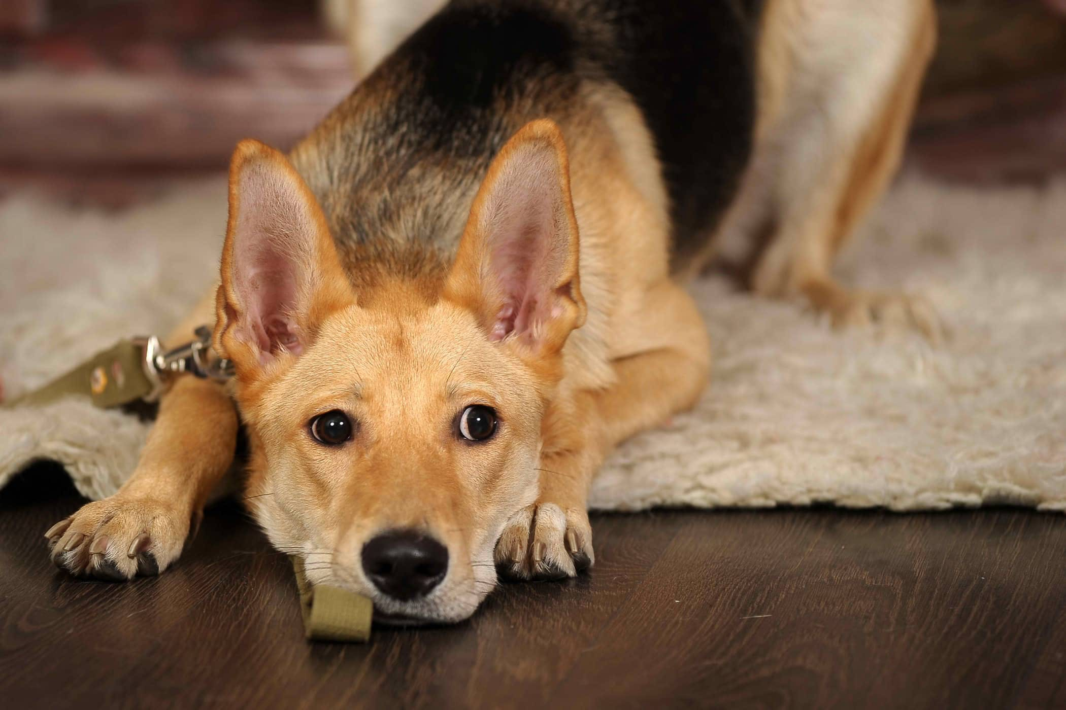 Urohydropulsion in Dogs