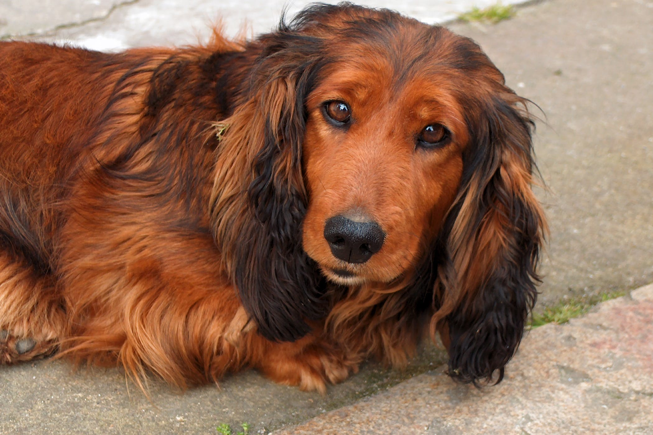 Uterine Prolapse Reduction in Dogs