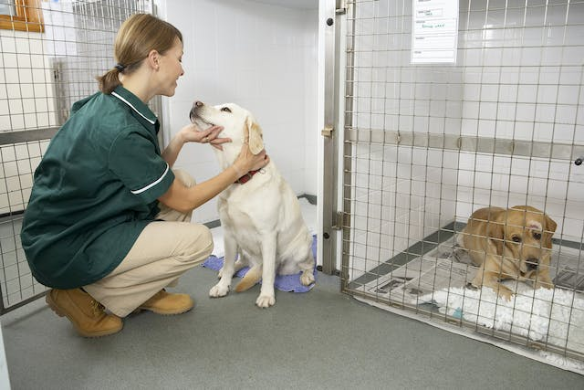 Vaginal Discharge in Dogs - Symptoms, Causes, Diagnosis, Treatment, Recovery, Management, Cost