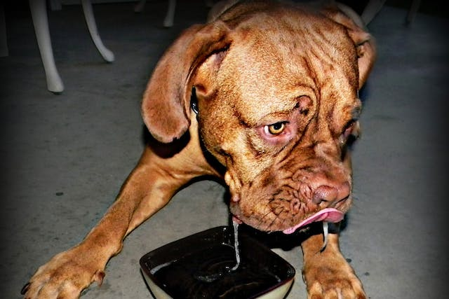 Vomiting with Bile in Dogs - Symptoms, Causes, Diagnosis, Treatment, Recovery, Management, Cost