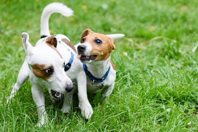 Why is my dog afraid of other canines?
