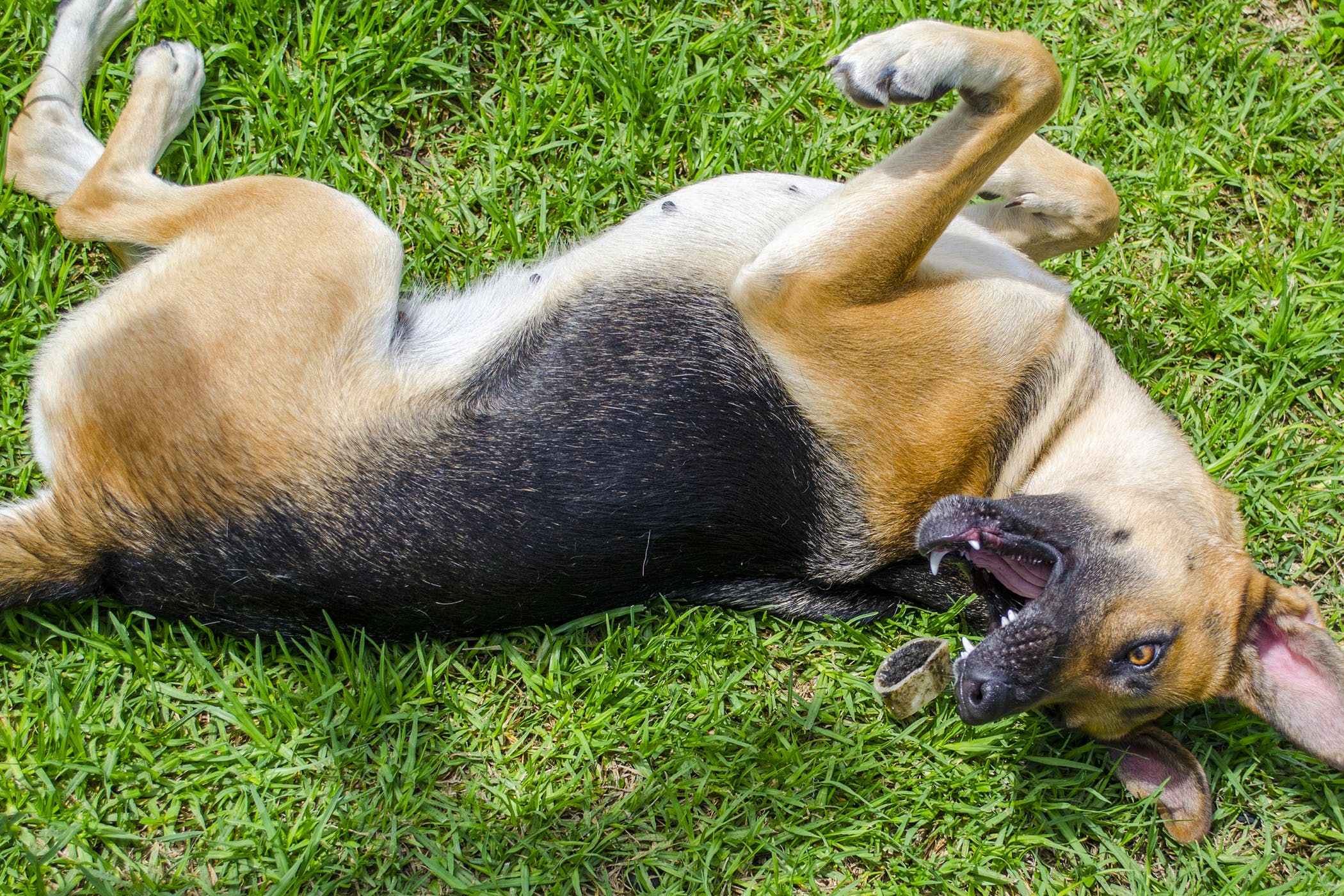 Can A Dog Have A Seizure From Heat