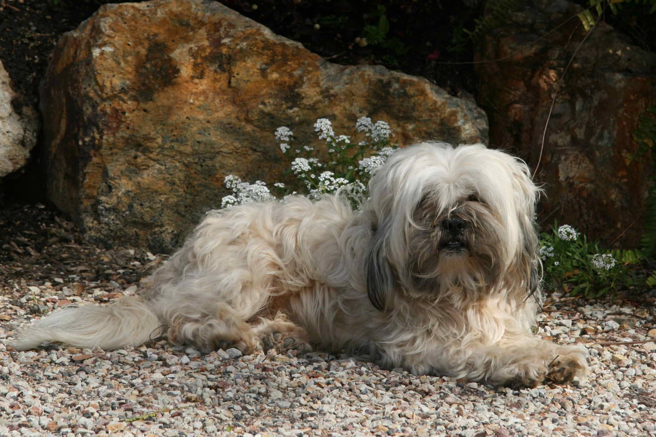 Itchy and Smelly in Dogs - Definition, Cause, Solution